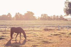 Horse on the Farm Stock Image