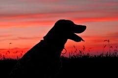 Sihouette van een hond bij zonsondergang Royalty-vrije Stock Foto's