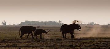 Sihouetted słonie Fotografia Stock