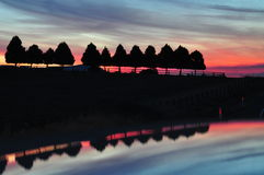 Sihouettes de um por do sol do vermelho uma fileira das árvores Imagens de Stock Royalty Free