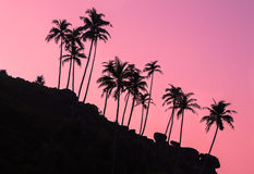 Sihouettes of palm trees on the stone hill at dawn Stock Image