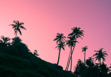 Sihouettes of palm trees on the stone hill at dawn Royalty Free Stock Image