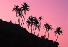 Sihouettes van palmen op de steenheuvel bij dageraad Stock Afbeelding