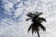 Sihullate кокосовой пальмы и голубого неба Стоковое Изображение RF