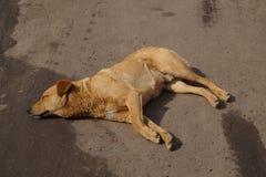 Sijpelende hond royalty-vrije stock afbeelding