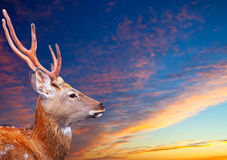Sika dee  against sunset sky Stock Image