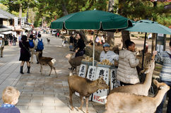 Sika deer feeding booth in Nara Royalty Free Stock Photography