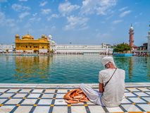 Sikh devotee at Golden Temple Stock Photography