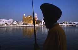 Sikh warrior in the golden temple, amritsar, punjab, india Royalty Free Stock Image