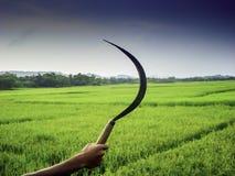 Sikkel in landbouwershand met de groene achtergrond van het padiegebied Royalty-vrije Stock Afbeeldingen