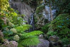 Siklawa i skały w bujny zieleni kwiaciastym środowisku, Azores fotografia stock