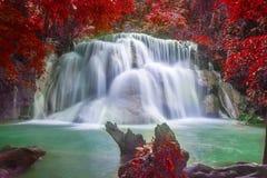 siklawa i zieleni lasowy miejsce spoczynku i relaksujemy czas Obraz Royalty Free