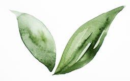 Siklawa koloru tekstury zieleni liścia tła acrylics farby biały odosobniony remis ilustracji