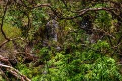 Siklawa należy levada w lesie na maderze fotografia royalty free