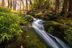Siklawa płynie delikatnie w bujny zieleni ulistnieniu Zdjęcie Stock