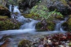 Siklawa w Carpathians górach lasowych fotografia stock