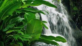Siklawa w dżungli zbiory