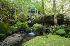 Siklawa w dżungli Obraz Royalty Free
