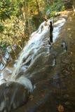 Siklawa w dżungli Zdjęcia Stock