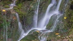 Siklawa w lasowej zieleni kamieniach i mech Lato Fotografia Stock