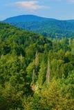Siklawa w lesie Obraz Royalty Free