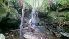 Siklawa w lesie zdjęcie wideo