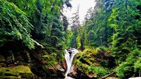 Siklawa w lesie obrazy stock