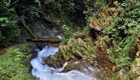 Siklawa w luksusowym tropikalny las deszczowy Fotografia Stock