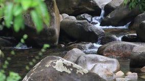 Siklawa w północy Tajlandia zbiory