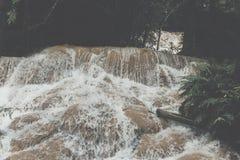 siklawa w tropikalny las deszczowy kaskadzie w las wody spływaniu w tro Zdjęcia Stock