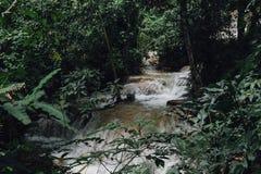siklawa w tropikalny las deszczowy kaskadzie w las wody spływaniu w tro Zdjęcie Royalty Free