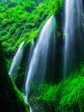 Siklawa w zielonym lesie Fotografia Stock