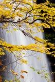 Siklawa z kolorów żółtych liśćmi w spadku obraz stock