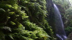 Siklawy ` lipiny ` w wyspie los angeles Palma, wyspy kanaryjska, Hiszpania zbiory