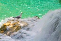 Siklawy na Krka rzece. Park Narodowy, Dalmatia, Chorwacja Fotografia Royalty Free