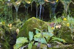 Siklawy zakrywać z zielonym mech Zdjęcia Stock
