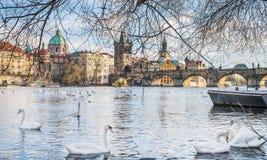 Sikt över den Charles bron, floden för stirrande Mesto, Vltava och svanar i Prague, Tjeckien royaltyfri foto