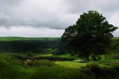 Sikt över den Gwaun dalen från Ffald-y-Brenin royaltyfria bilder