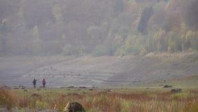 Sikt över den Oder behållaren i Harz bergskedja, Tyskland arkivfilmer