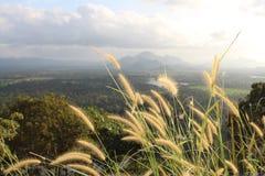 Sikt över fälten och skogen från Lion Rock, Sigiriya Arkivfoto