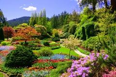Sikt över färgrika blommor av en trädgård på vår, Victoria, Kanada Royaltyfri Foto