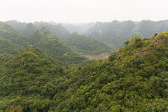 Sikt över grön skog Royaltyfri Fotografi