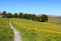 Sikt över gulingfält till den Ribblehead viadukten Royaltyfri Bild