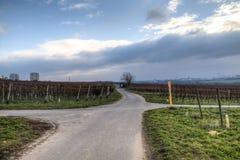 Sikt över vingårdarna i Hochheim, Tyskland fotografering för bildbyråer