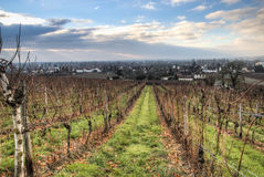 Sikt över vingårdarna i Hochheim, Tyskland arkivbild