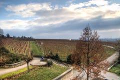 Sikt över vingårdarna i Hochheim, Tyskland Royaltyfri Bild