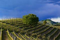 Sikt över vingårdarna och de Langa kullarna under en åskväder Arkivbilder