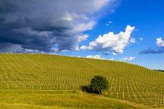 Sikt över vingårdarna och de Langa kullarna under en åskväder Royaltyfria Foton