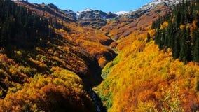 Sikt Autumn Forest With River arkivfilmer