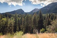 Sikt av ängen, träd och berg i amerikansk gaffelkanjon Fotografering för Bildbyråer